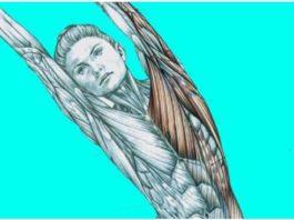 Как после массажа: Эти 5 упражнений — лучший подарок для вашей спины