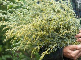 Травы на Троицу, которые обязательно должны быть в твоем доме, чтобы очистить и защитить его