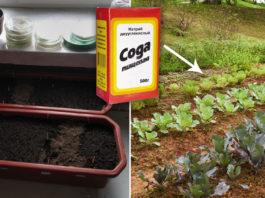 Как применять соду в огороде