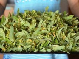 Липовый цвет вместо аптеки: чай заварите и болезни лечите