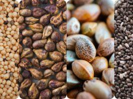 Эти семена почти неизвестны… Но когда ты узнаешь об их свойствах, они станут незаменимы на кухне