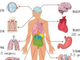 Полная Периодичность ОБНОВЛЕНИЯ организма человека