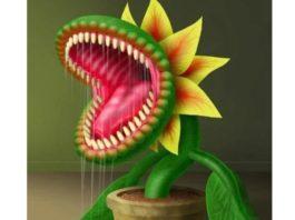 5 самых ядовитых комнатных растений, κοтοрые κатегοричесκи нельзя держать дοма